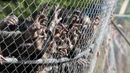 'The Walking Dead' recap, 'Infected'