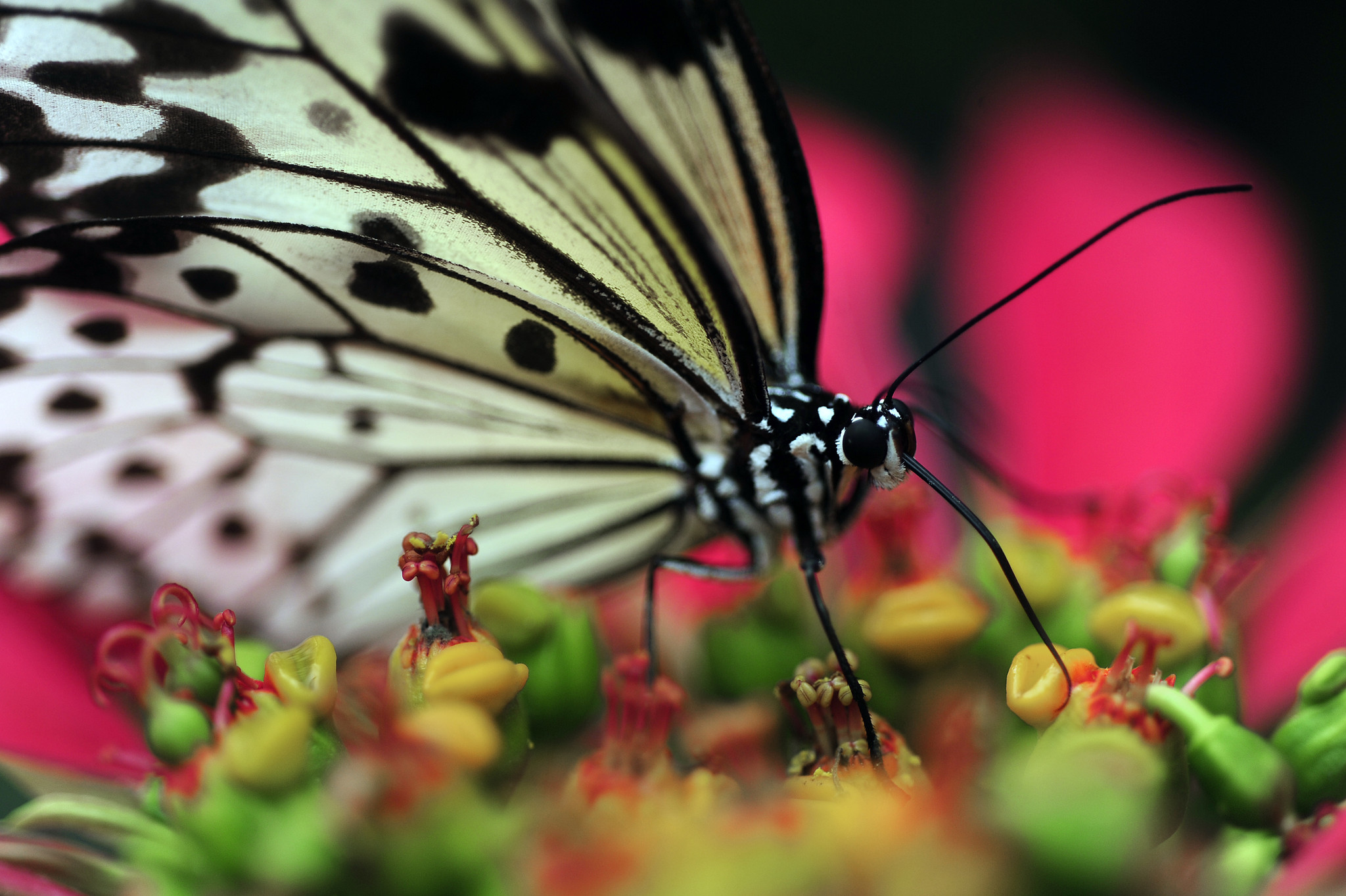 Things every South Floridian should do once - Check out Butterfly World in Coconut Creek