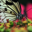 Check out Butterfly World in Coconut Creek