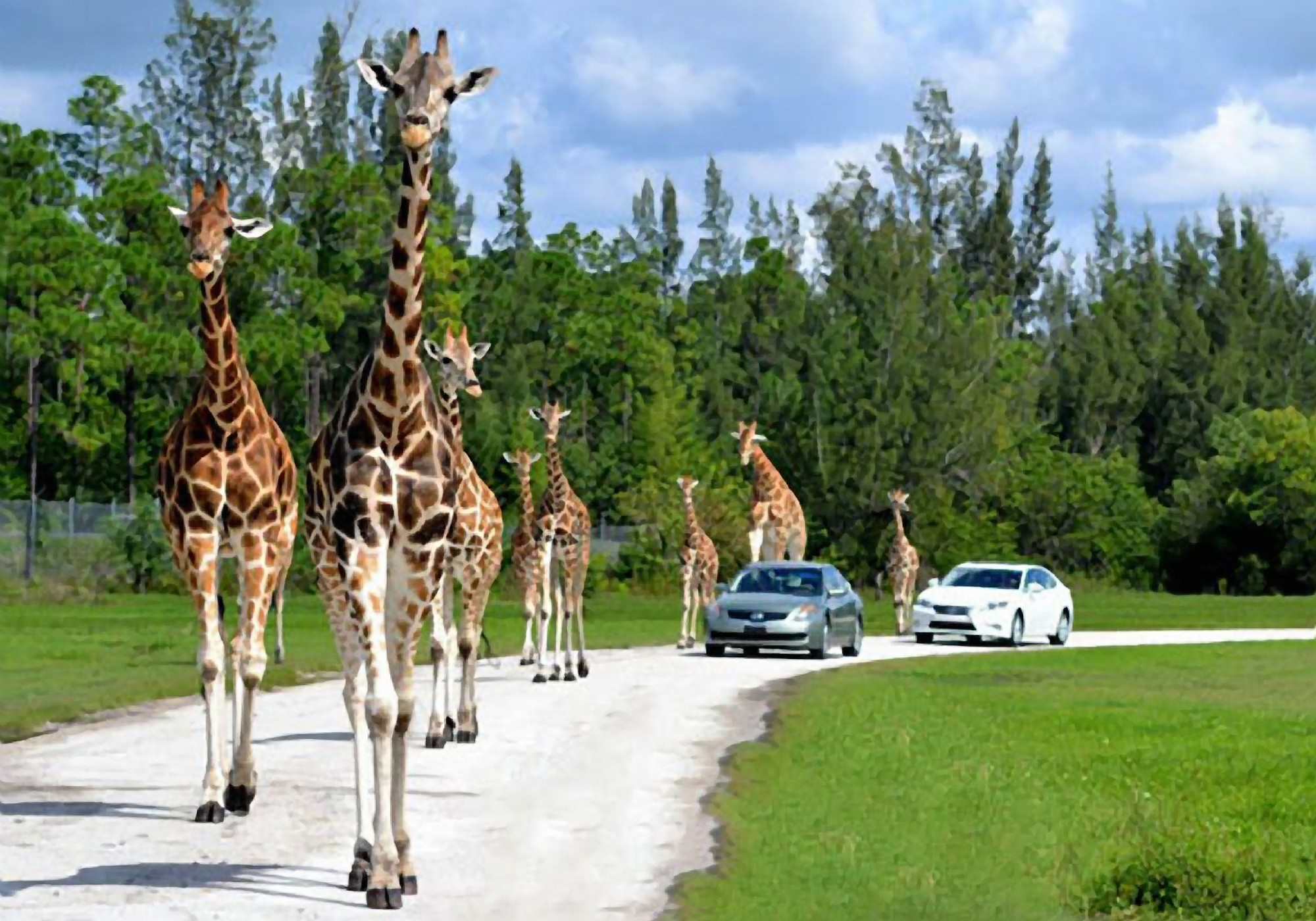 Things every South Floridian should do once - Lion Country Safari in Loxahatchee