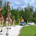 Lion Country Safari in Loxahatchee