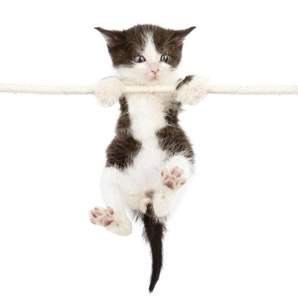 "Hallmark Channel announces its first-ever ""Kitten Bowl."""