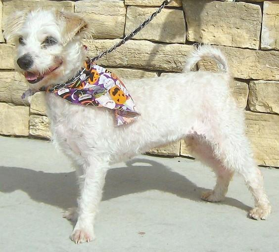 Blossom, an 18-month-old terrier mix.