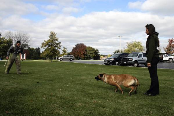 Northbrook resident Carlos Aguirre, a former marine and a Purple Heart veteran, trains one of his dogs, 4-year-old Beluah, on Monday, Oct. 21, together with his wife Elizabeth Oliva at the Wood Oaks Green Park in Northbrook. The couple started their own dog training business about a year ago.
