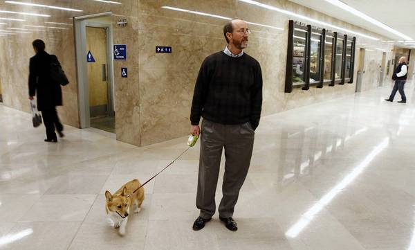 Steve Glazer walks Gov. Jerry Brown's Corgi, Sutter, through the halls of the Capitol in 2011, when Glazer was working as a strategist for Brown.