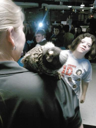 Senay Sallveski, 19, a Lyons Township High School Transition Program participant, eyed a common marmoset Thursday morning at the high school.