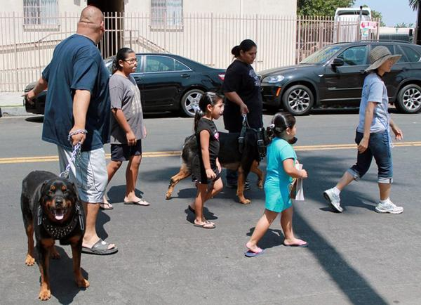 People attend the LAPD 77th Division Community Dog Clinic in South Los Angeles. Downtown Dog Rescue founder Lori Weise is trying to educate the public not just about the needs of pets, but the struggles of people who love them.