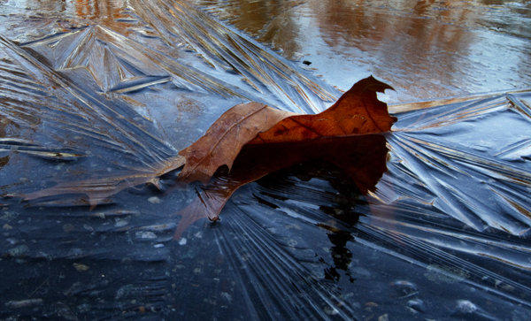 A leaf trapped in ice rests in a wind-driven coating of ice in this ice-covered puddle in Newport News. Warmer evening temperatures in recent days have been replaced with the return of colder more seasonal ones.
