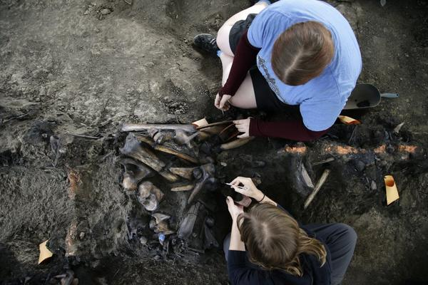 On Monday, the George C. Page Museum celebrated a century of excavation at the La Brea Tar Pits with a guided tour by the dig sites museum curator and free admission for visitors.