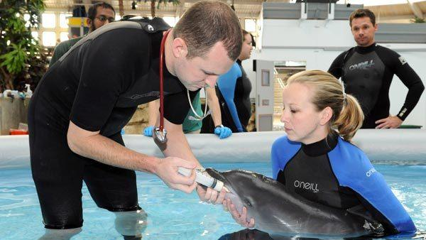 Michael Adkesson, DVM, Dipl. ACZM, vice president of clinical medicine for the Chicago Zoological Society, provides nutritional support to a neonatal dolphin born at Brookfield Zoo on October 28. He is assisted by Jamie Kennedy, a senior keeper for the Society.