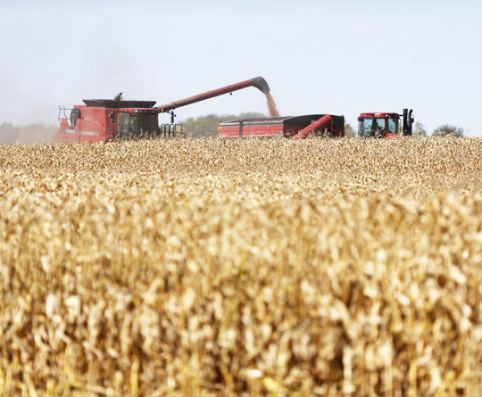 Corn flows from a combine into a grain wagon as harvest workers move through a corn field on Nick Berbos' farmland north of Wylie Park earlier in October.