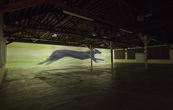 "Sturtevant's ""Finite Infinite"" is a nine-second video installation."