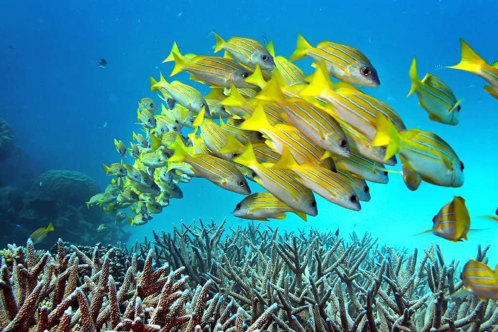 coral reefs journal instructions authors