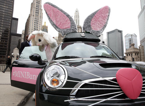 A local hotel dispatched a man in a rabbit suit to Pioneer Court in this bunny-themed Mini.