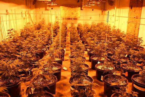 Pot plants fill a growing room at a medical marijuana center in Denver. The record in jurisdictions where marijuana laws have been loosened shows that fears of dire consequences were unfounded.