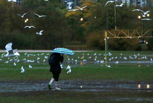 A morning walker near North Avenue Beach passes through a sea of gulls as showers drench the city Thursday morning.