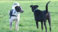 What is your dog really saying with a tail wag?