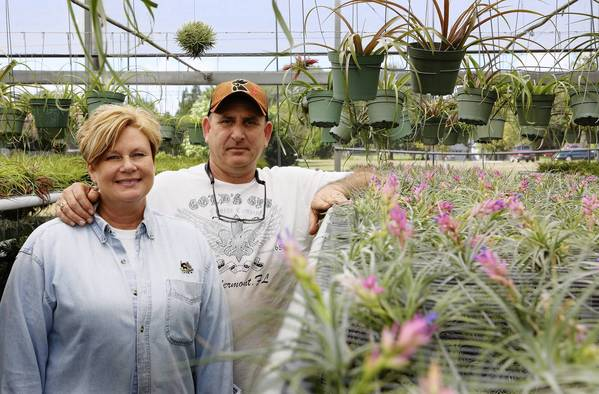 Mike and Debbie Salvi will have their Tillandsia bromeliads on display at the Mount Dora Plant and Garden Fair, Nov. 2 and 3 in downtown Mount Dora.