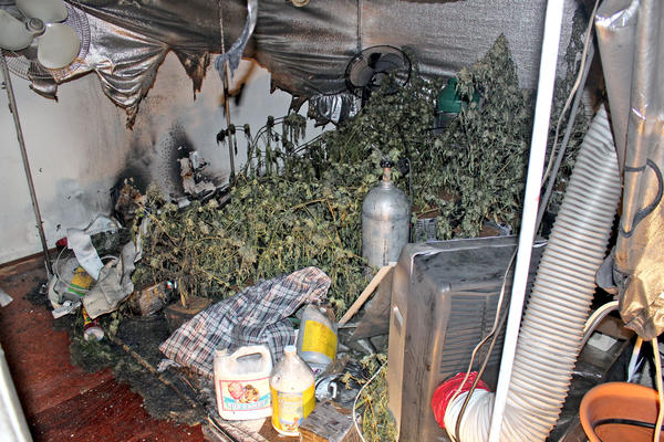 Glendale police discovered marijuana plants in two rooms of an apartment in the 200 block of North Belmont Street after smoke was discovered emanating from the front door.
