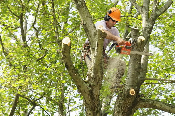 Connecticut Light and Power to begin tree work on Monday.