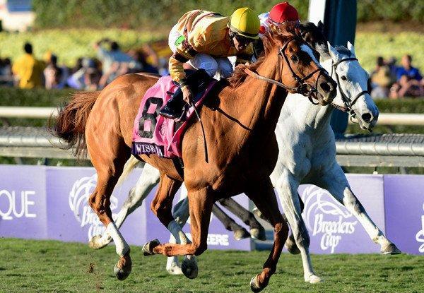 Jose Lezcano rides Wise Dan to victory in the Breeder's Cup Mile on Saturday at Santa Anita.