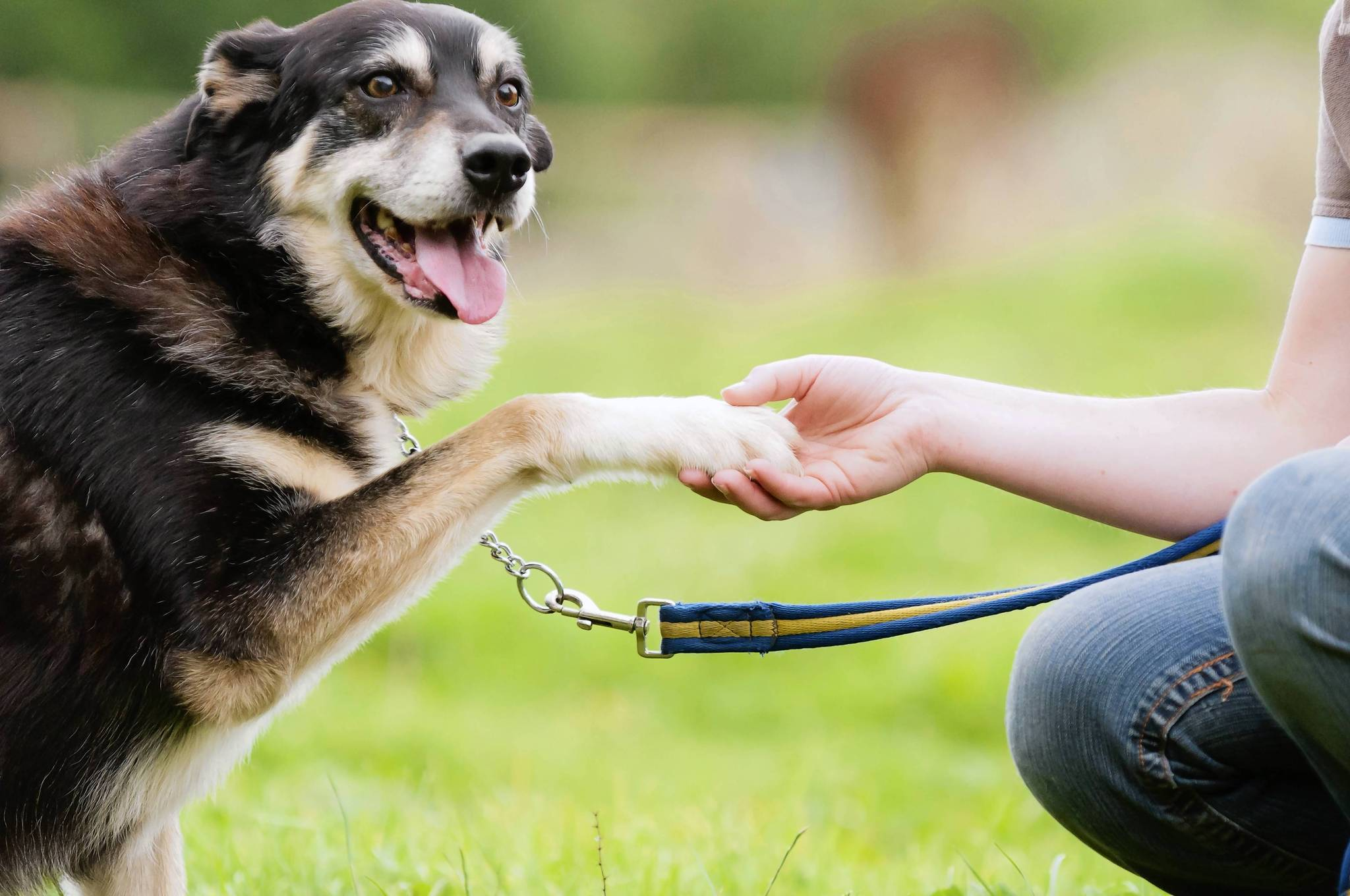 Life Skill #618: Teaching a dog how to shake hands
