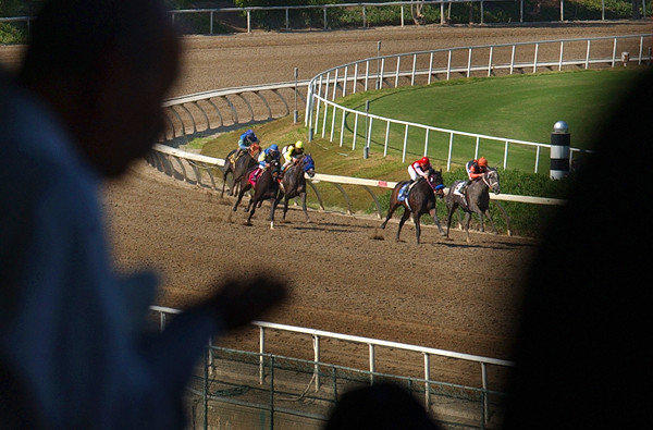 Fans cheer as horses make their way around the turn before the homestretch at Hollywood Park.