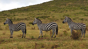 In Tanzania, a couple joins the animals' great migration