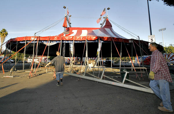 Local workers were hired to help put up the Ramos Circus tent on the Civic Center Auditorium's parking lot in Glendale on Tuesday, Nov. 20, 2012. The circus will be in town from Friday Nov. 23 through Monday Dec. 3.
