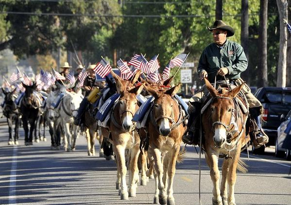 A group of 100 mules walk on Western Avenue in Glendale. They have walked for the last 25 days along the L.A. Aqueduct, a trek that ended at the Los Angeles Equestrian Center in Burbank.