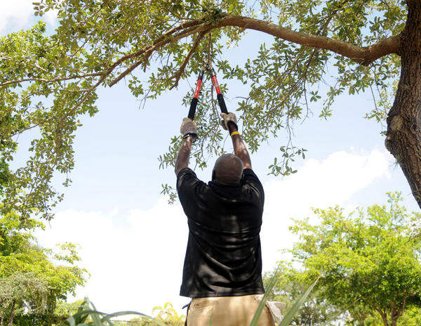 Todd Roller Antoine Cadet, of North Lauderdale, stretches out to cut tree limbs at the Central Family office clean-up in North Lauderdale.