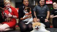 Boo (world's cutest dog) to New Yorkers: Adopt airlifted Chihuahuas!