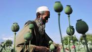 Afghan opium crop soared this year, U.N. says