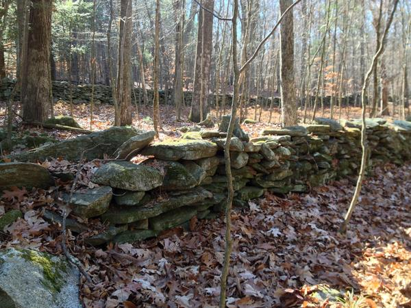These two stone walls run parallel with each other. In the old days there may have been a road between them.