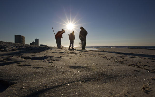 Cleanup crews search for oily tar balls from the Deepwater Horizon spill along the beach in Gulf Shores, Ala.