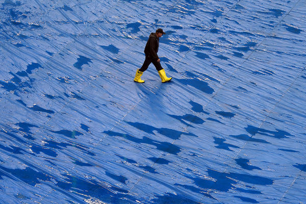 A man walks across the tarp covering the field before the football game between the Chicago Bears and the Baltimore Ravens on Sunday.