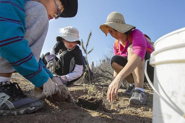 Carol del Rosario, right, plants a coastal sage with her nephews Ryan Lee, 12, and Daren Lee, 9, during a Family Volunteer Day event at Muth Interactive Center on Sunday.