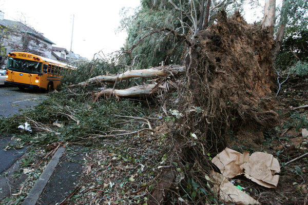 A school bus passes a fallen eucalyptus tree in Oakland on Friday after high winds battered the region.