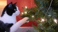 Holiday cat tips: 8 Tips to keep your cat safe during the holidays
