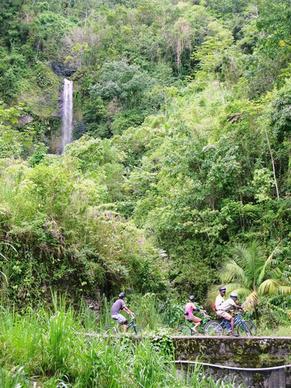 Biking through the Blue Mountains of Jamaica with the Blue Mountain Bicycle Tour.