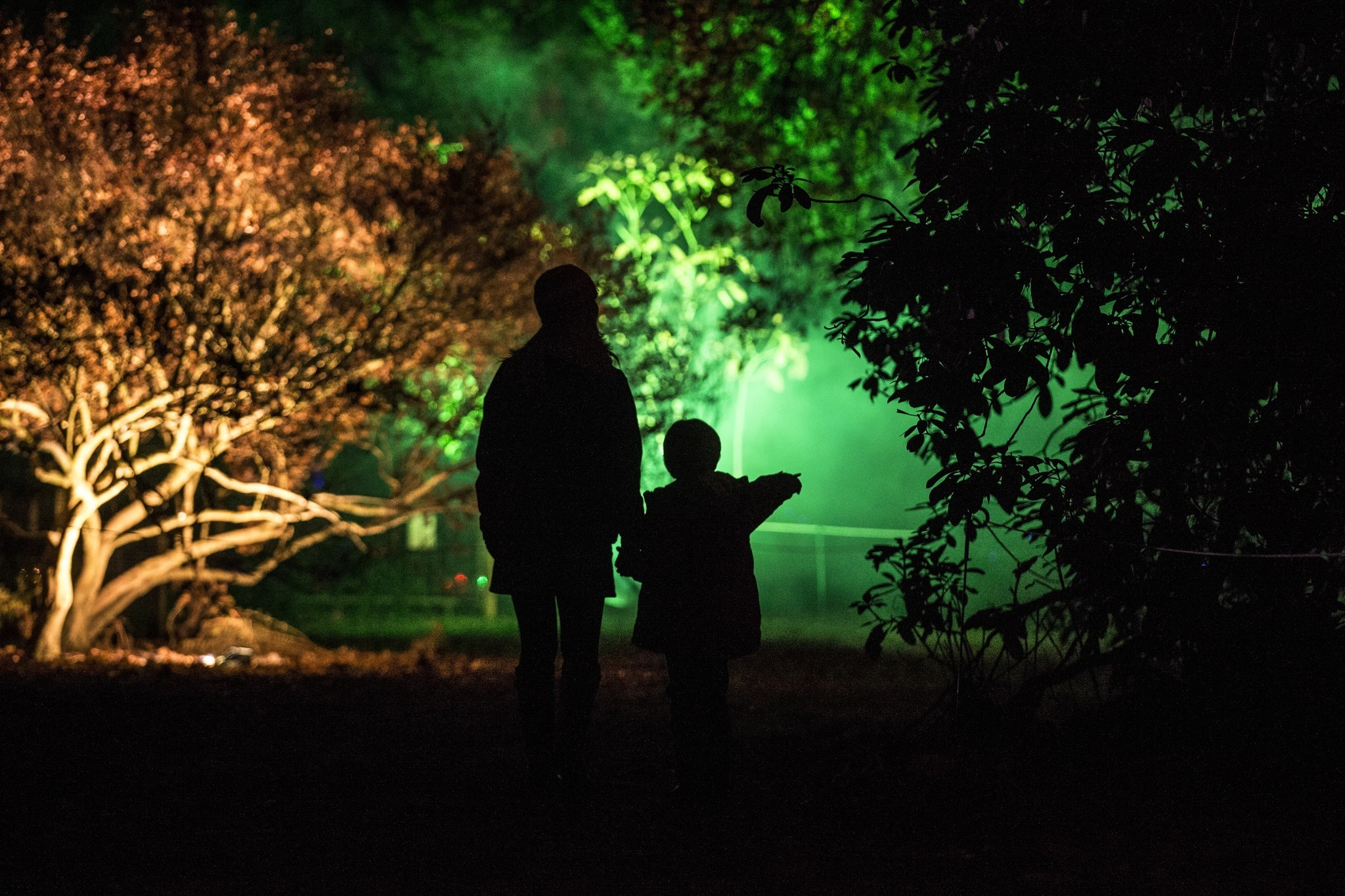 Pictures: Holiday lights from around the globe - Westonbirt Arboretum Lights Up An Illuminated Trail