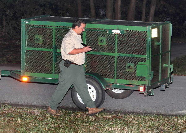 FWC set out a trap late Monday, December 2, 2013 night after a woman was attacked by a black bear. Early Tuesday morning there hasn't been any sign of the bear off Markham Woods Road in Longwood.