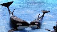 Pictures: Killer whale shows at SeaWorld Orlando