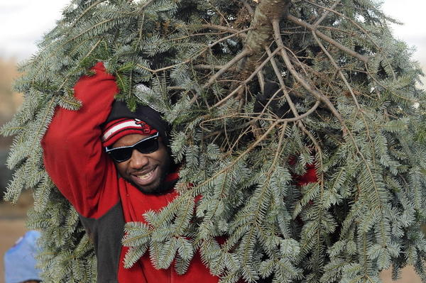 According to the National Christmas Tree Growers Association, 6- to 7-footers are the most popular size for holiday trees.