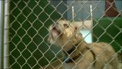 Puppy Mill Task Force To Hold Final Public Hearing