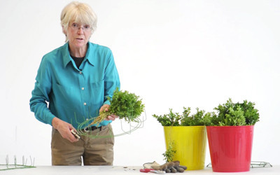 How to make a boxwood wreath [Video]