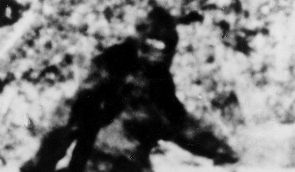 A still photograph from the famous Patterson-Gimlin film that purports to show Bigfoot.