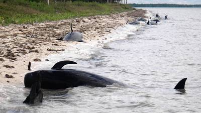 A hopeful turn for whales stranded in Everglades