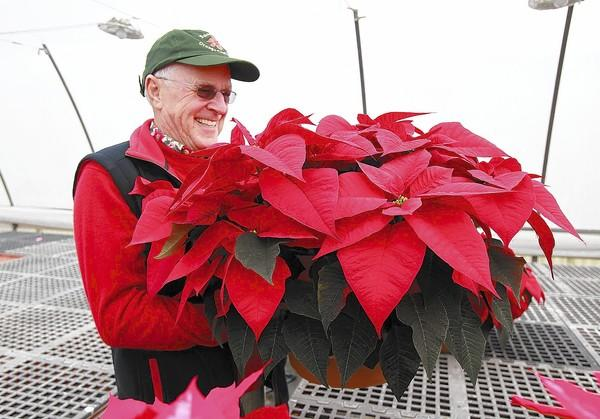 Professor Emeritus John Lenanton picks up one of the last big poinsettias during the annual poinsettia sale on Friday at OCC. The greenhouse sale nearly sold out of the popular seasonal holiday plant in a half hour.