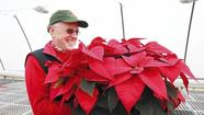 Poinsettias key to season, horticulture program